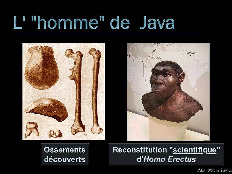 Reconstitution scientifique d Homo Erectus