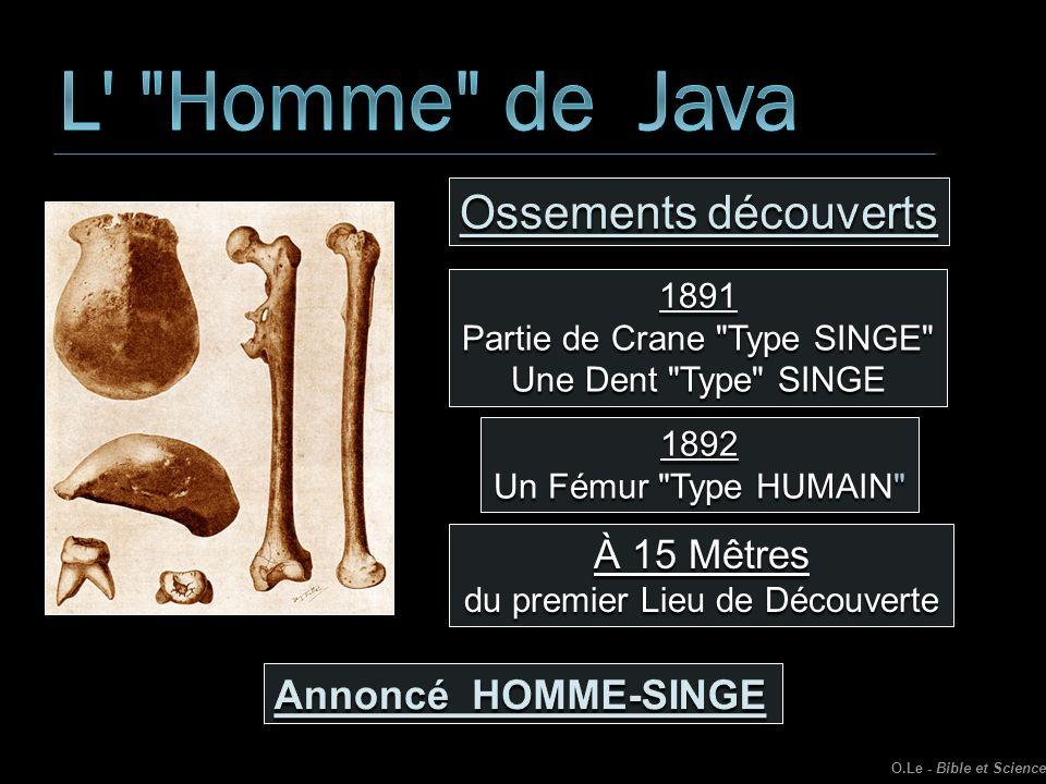 L Homme de Java Ossements découverts À 15 Mêtres