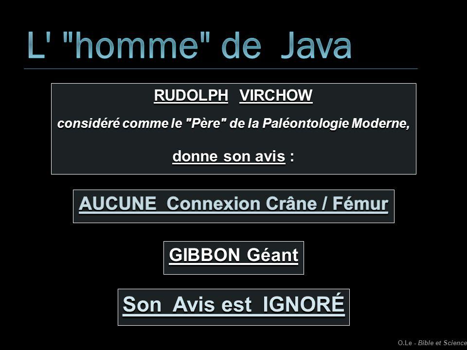 L homme de Java Son Avis est IGNORÉ AUCUNE Connexion Crâne / Fémur