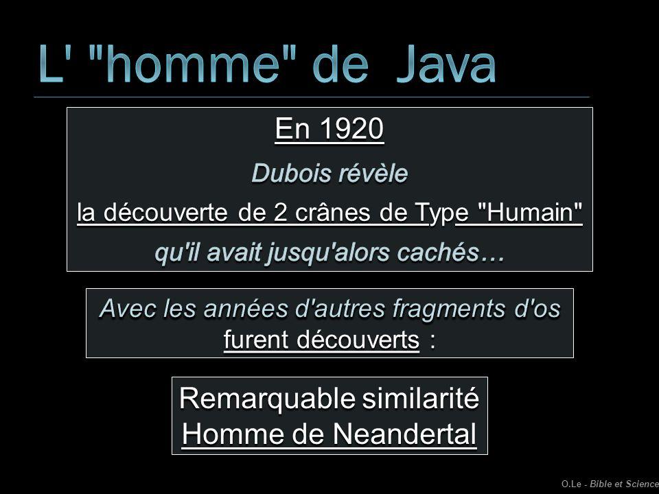 L homme de Java En 1920 Remarquable similarité Homme de Neandertal