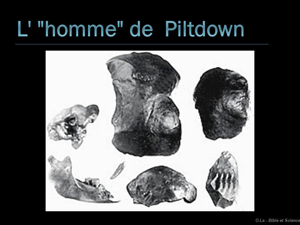 L homme de Piltdown O.Le - Bible et Science
