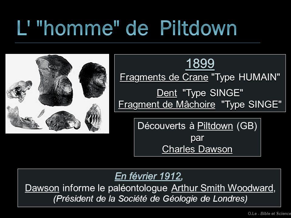 L homme de Piltdown 1899 Fragments de Crane Type HUMAIN