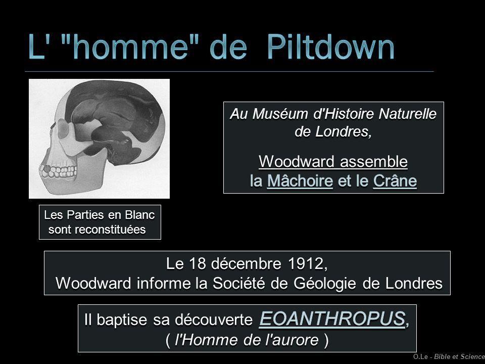 L homme de Piltdown Woodward assemble la Mâchoire et le Crâne