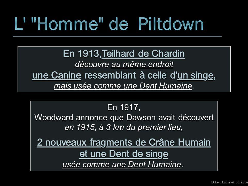 L Homme de Piltdown En 1913,Teilhard de Chardin