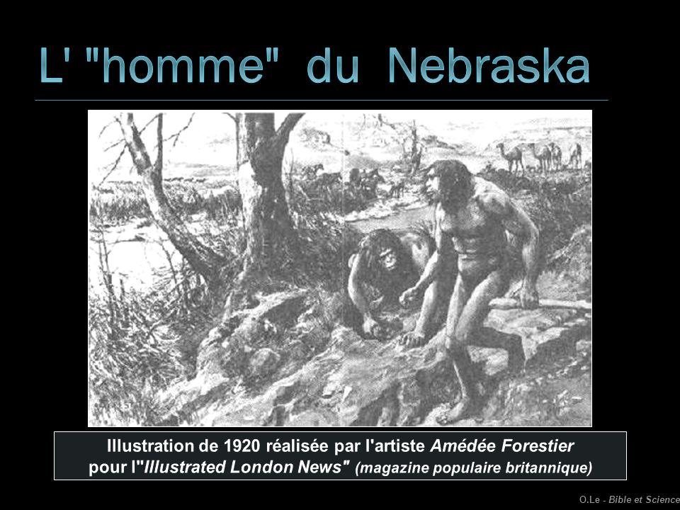 L homme du Nebraska Illustration de 1920 réalisée par l artiste Amédée Forestier.
