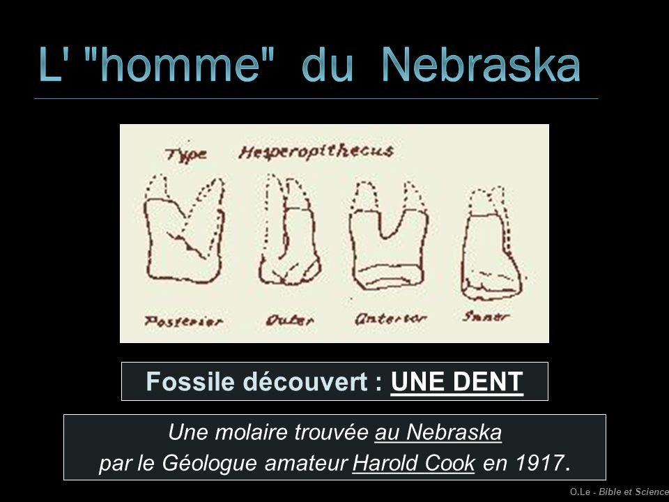 Fossile découvert : UNE DENT