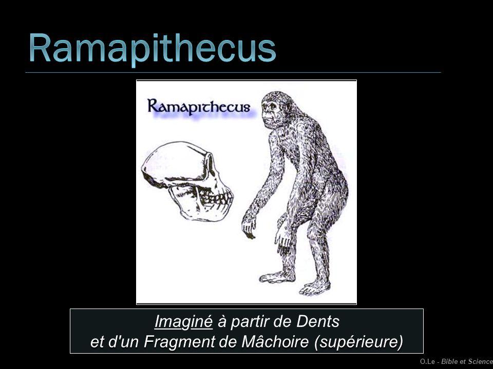 Ramapithecus Imaginé à partir de Dents