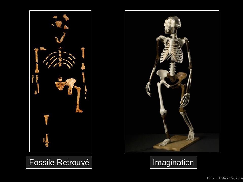 Fossile Retrouvé Imagination O.Le - Bible et Science