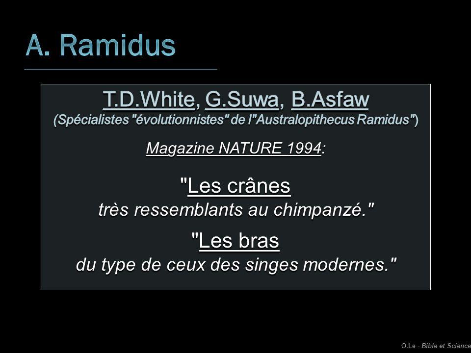 A. Ramidus T.D.White, G.Suwa, B.Asfaw Les crânes Les bras