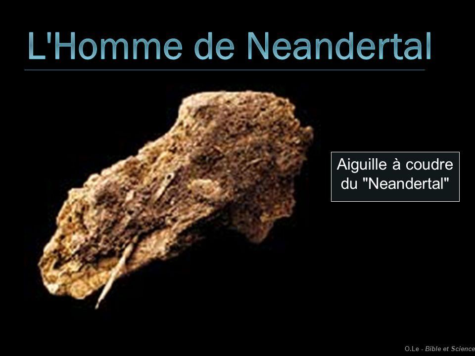 L Homme de Neandertal Aiguille à coudre du Neandertal .