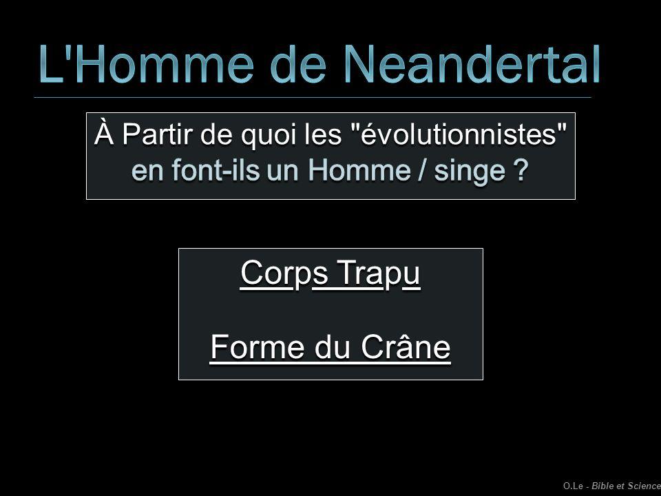 L Homme de Neandertal Corps Trapu Forme du Crâne