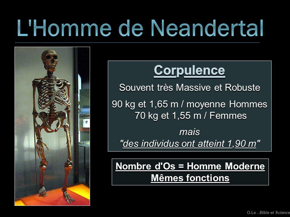 Nombre d Os = Homme Moderne