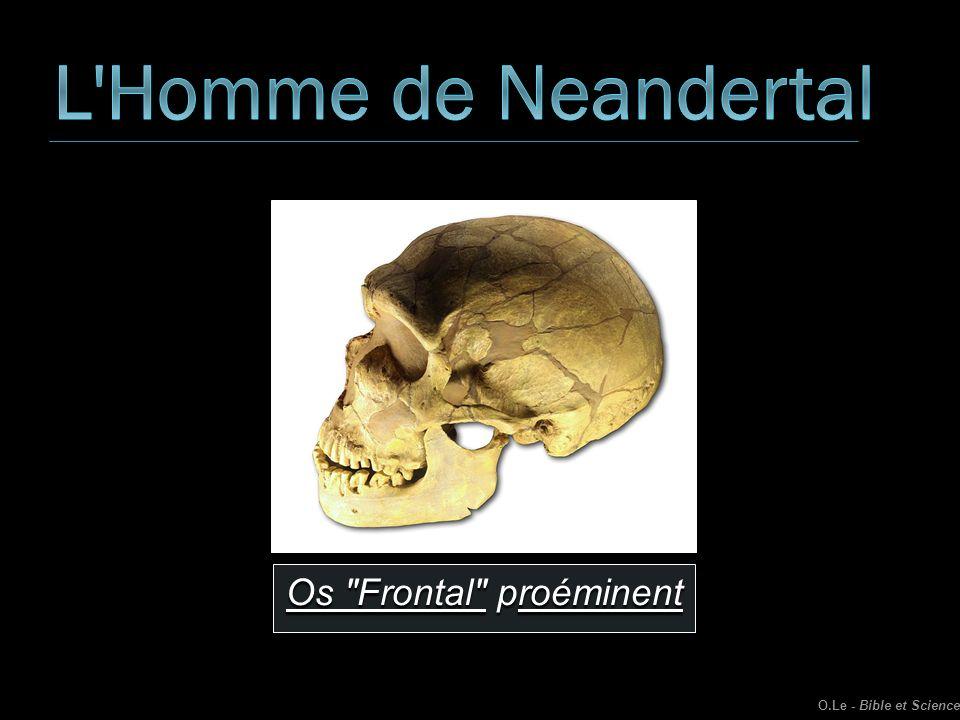 L Homme de Neandertal Os Frontal proéminent O.Le - Bible et Science