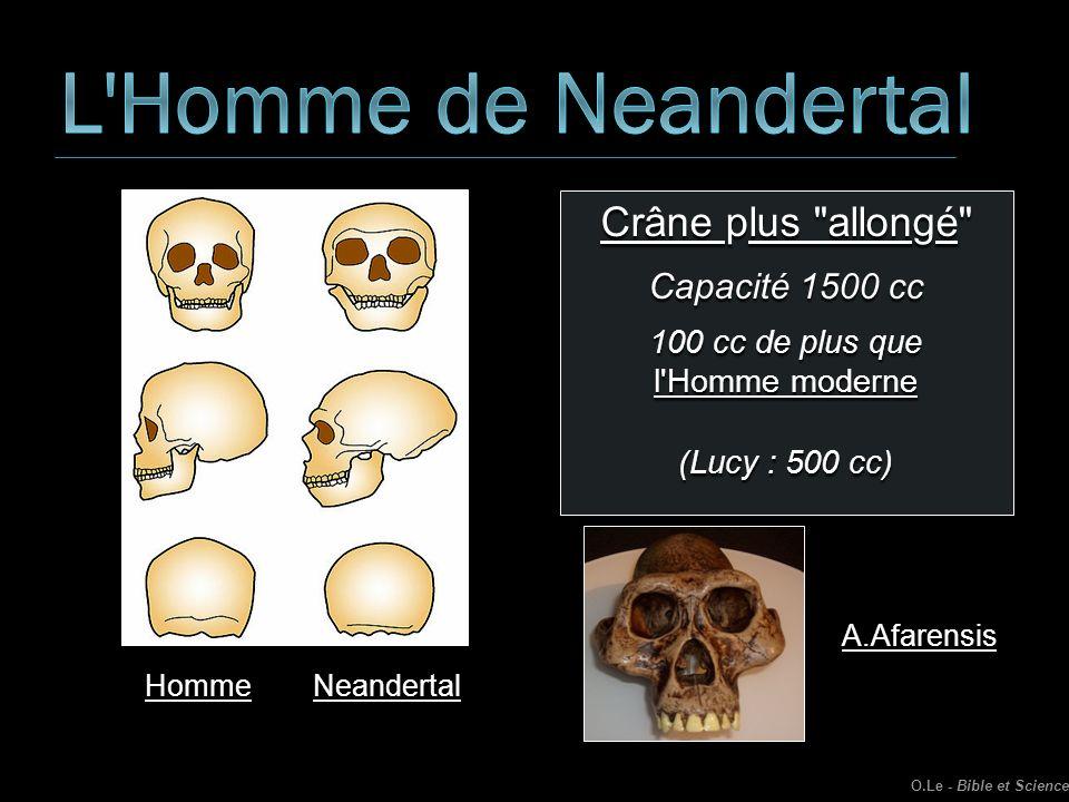 L Homme de Neandertal Crâne plus allongé Capacité 1500 cc
