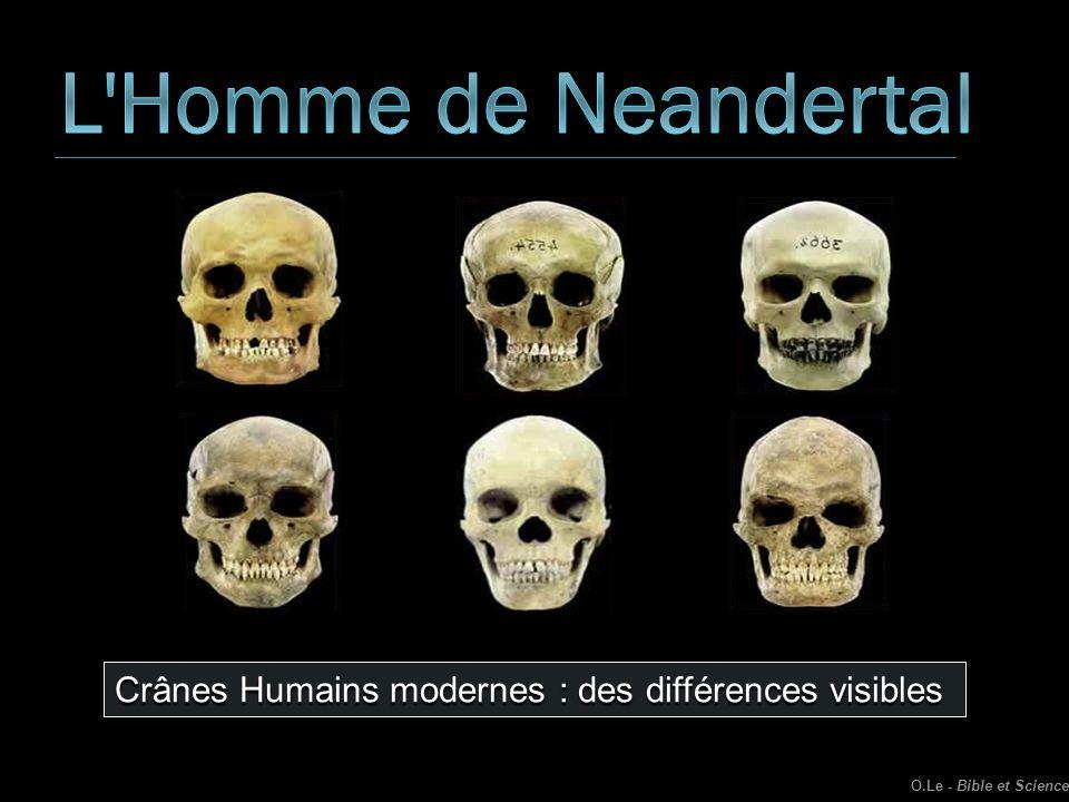 L Homme de Neandertal Crânes Humains modernes : des différences visibles O.Le - Bible et Science