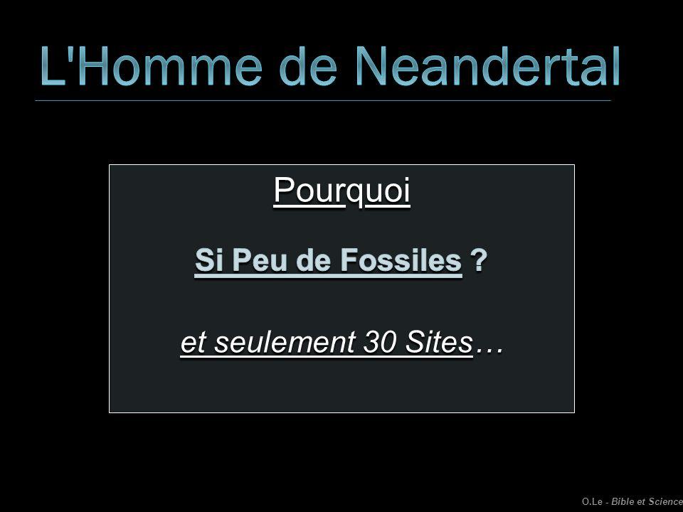 L Homme de Neandertal Pourquoi Si Peu de Fossiles