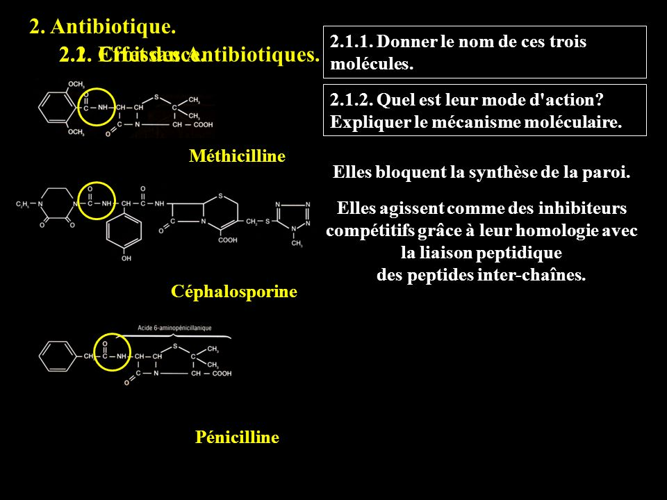 Elles bloquent la synthèse de la paroi. des peptides inter-chaînes.