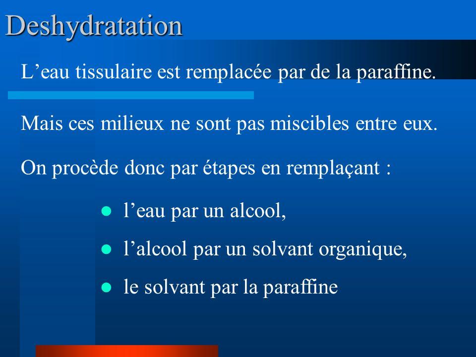 Deshydratation L'eau tissulaire est remplacée par de la paraffine.