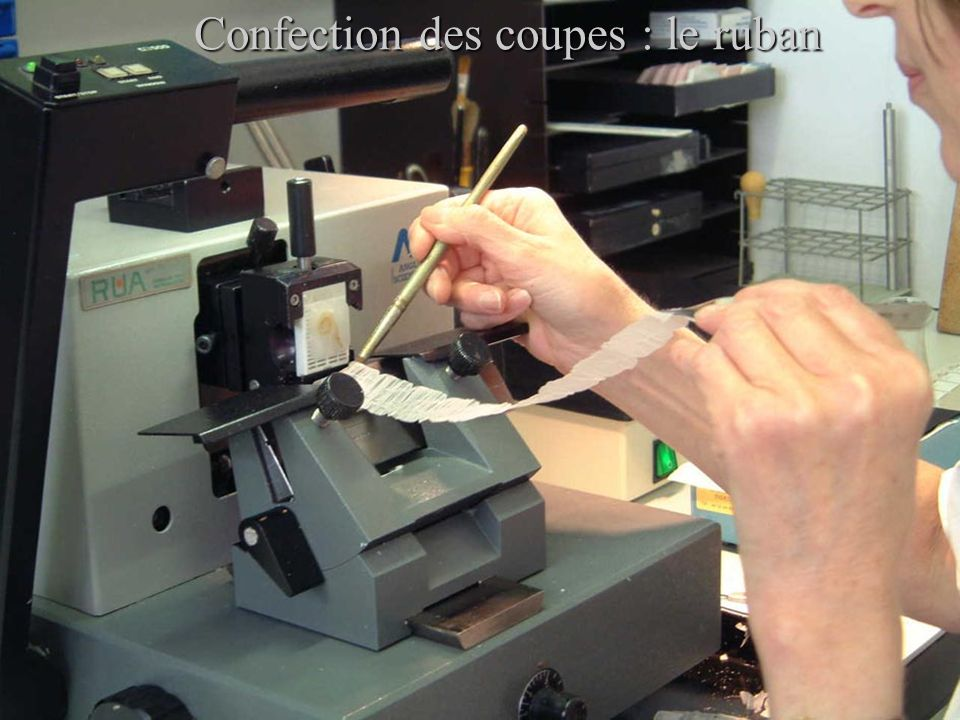 Confection des coupes : le ruban