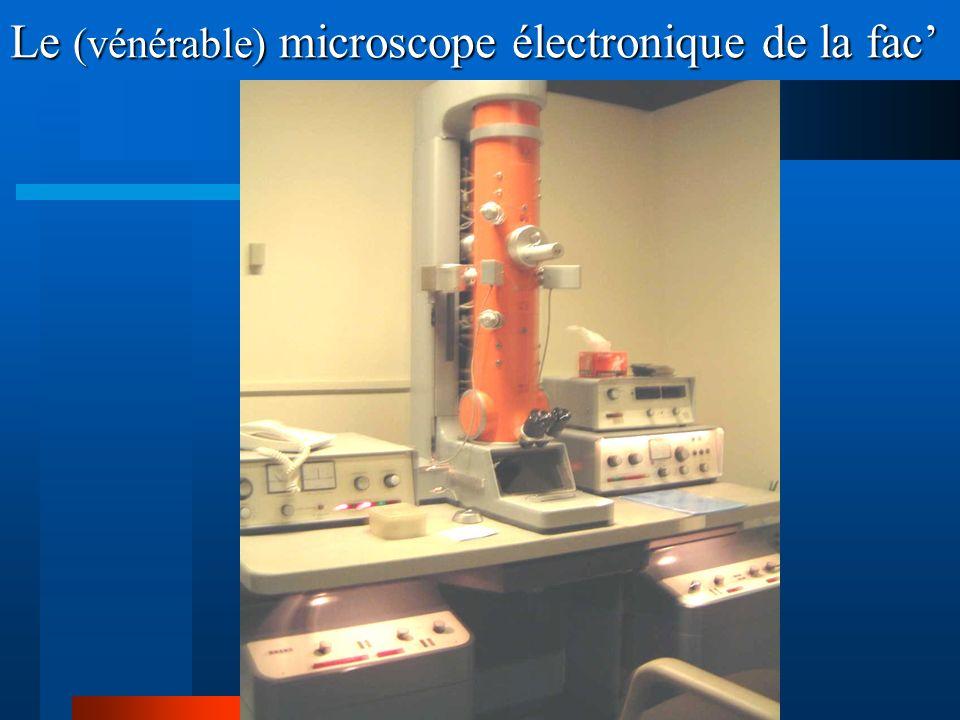 Le (vénérable) microscope électronique de la fac'