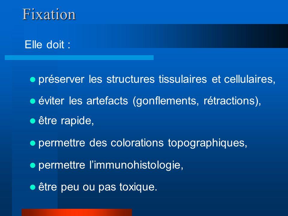 Fixation Elle doit : préserver les structures tissulaires et cellulaires, éviter les artefacts (gonflements, rétractions),