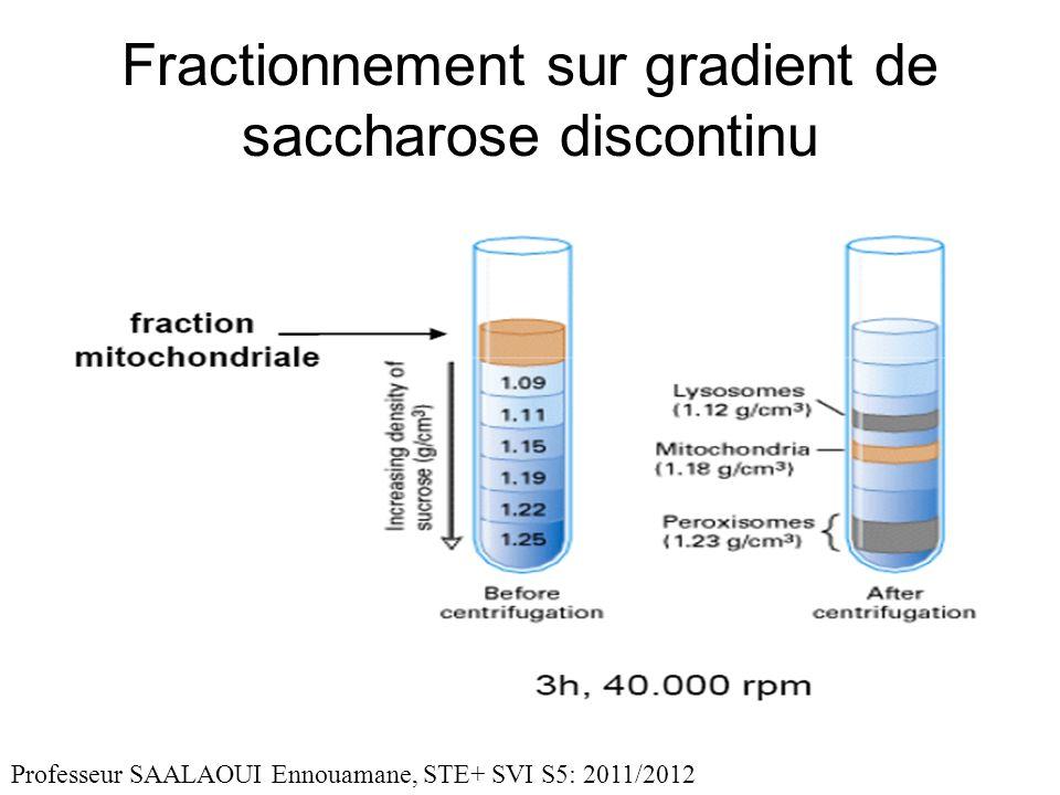 Fractionnement sur gradient de saccharose discontinu