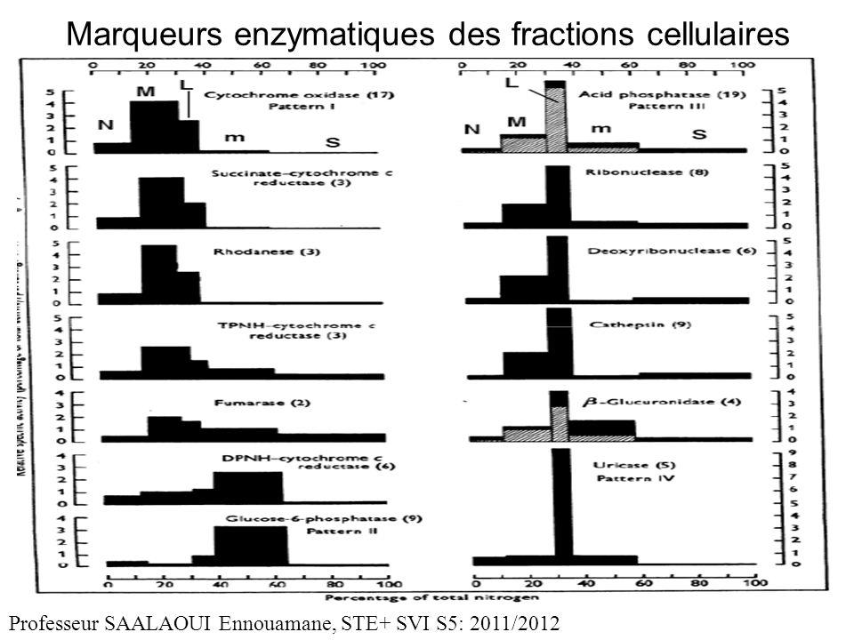 Marqueurs enzymatiques des fractions cellulaires