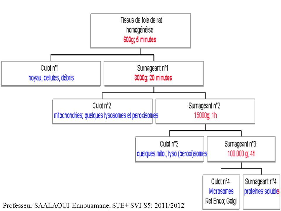Professeur SAALAOUI Ennouamane, STE+ SVI S5: 2011/2012