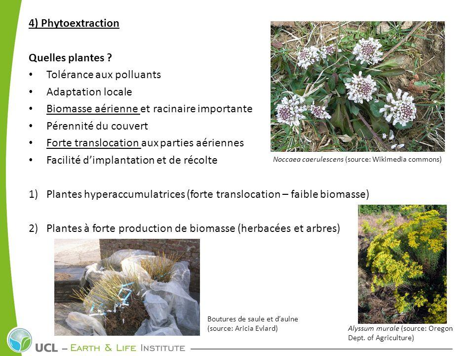 Tolérance aux polluants Adaptation locale