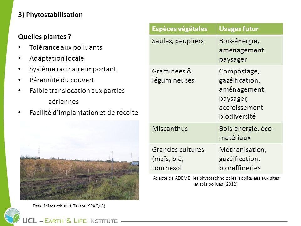 Tolérance aux polluants Adaptation locale Système racinaire important