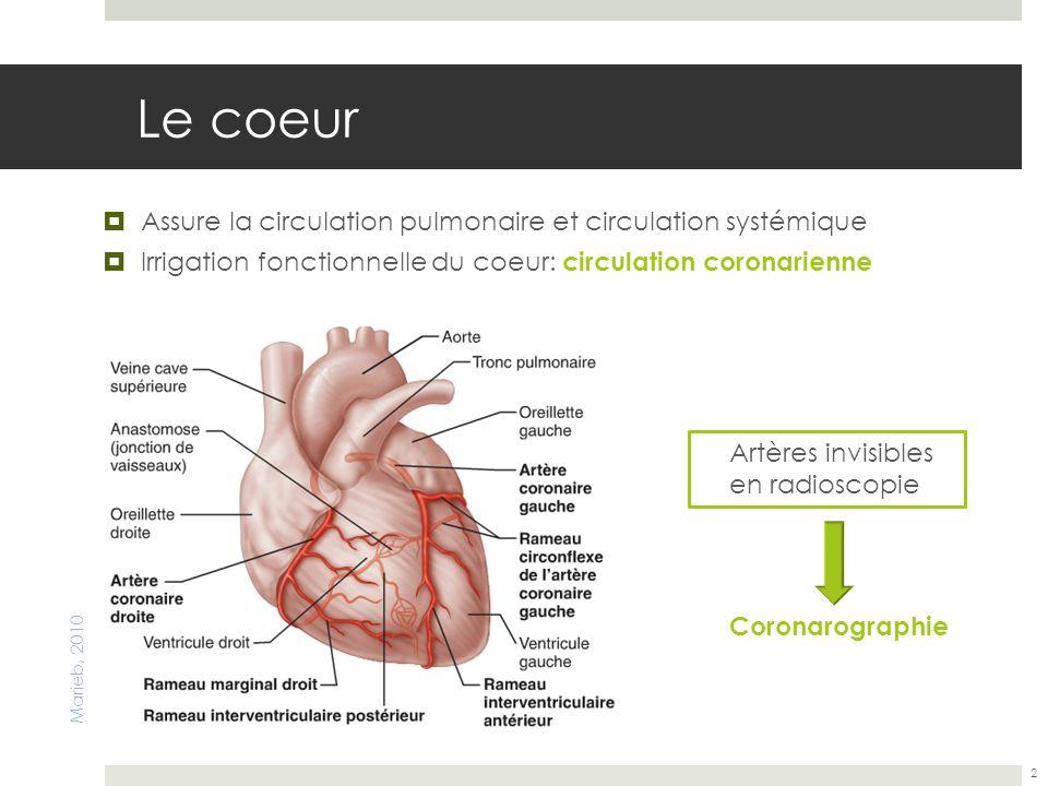 Le coeur Assure la circulation pulmonaire et circulation systémique