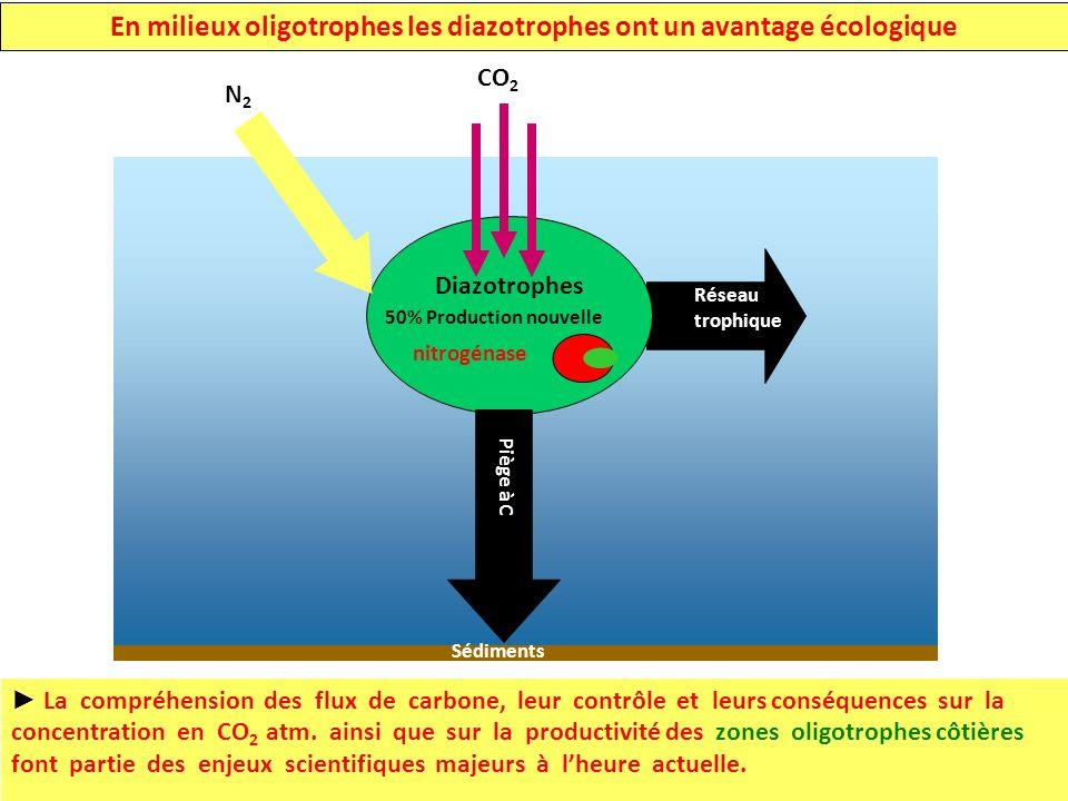 En milieux oligotrophes les diazotrophes ont un avantage écologique