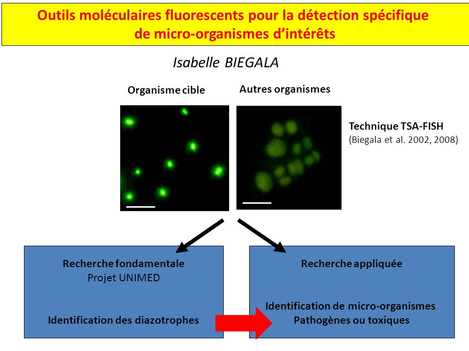 Outils moléculaires fluorescents pour la détection spécifique