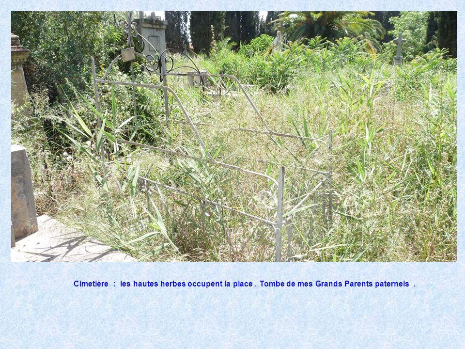 Cimetière : les hautes herbes occupent la place
