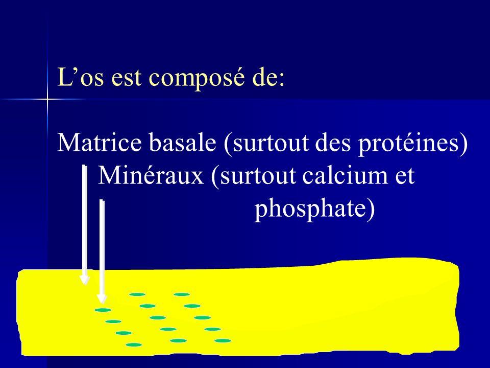 L'os est composé de: Matrice basale (surtout des protéines) Minéraux (surtout calcium et phosphate)