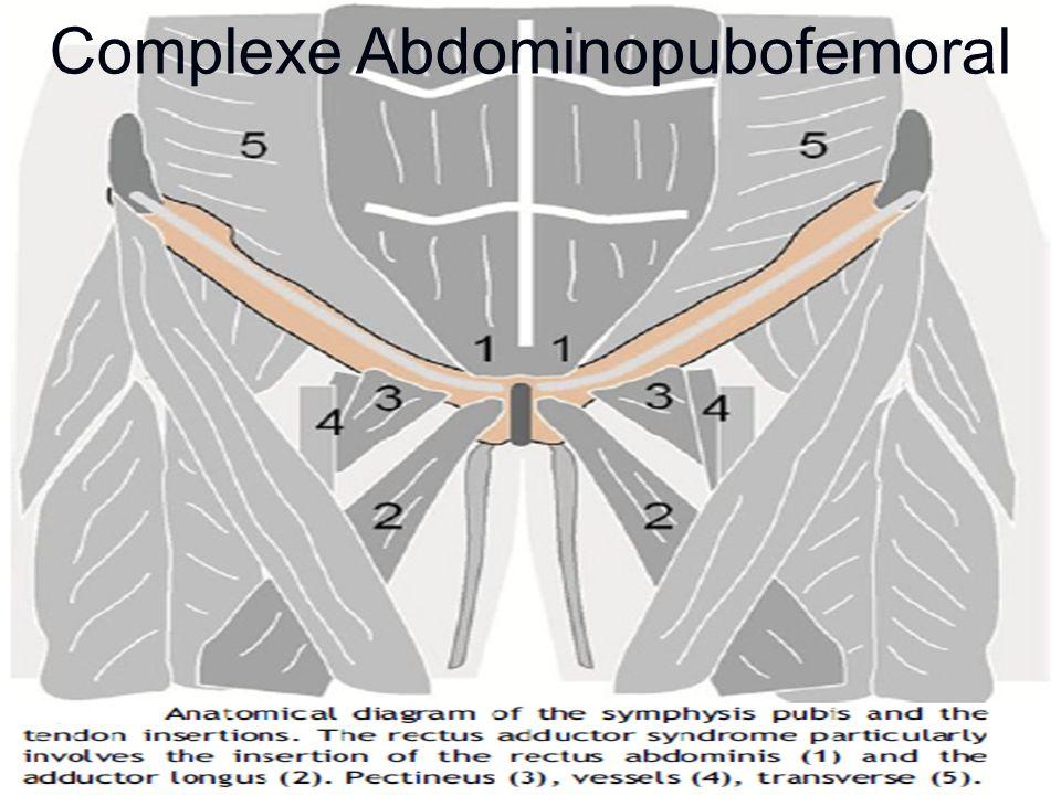 Complexe Abdominopubofemoral