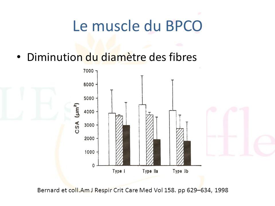 Le muscle du BPCO Diminution du diamètre des fibres