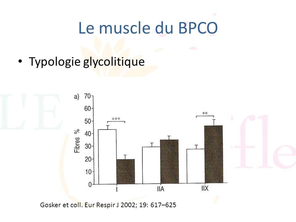 Le muscle du BPCO Typologie glycolitique