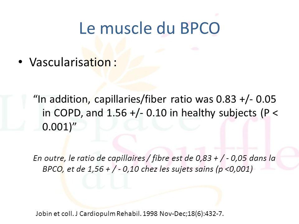 Le muscle du BPCO Vascularisation :