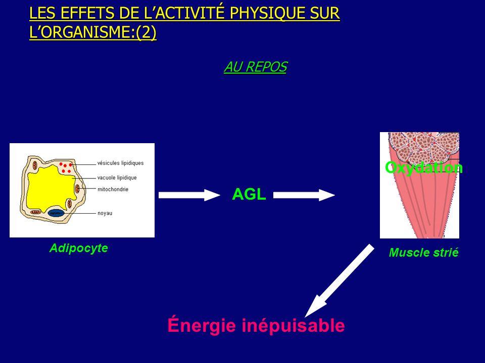 LES EFFETS DE L'ACTIVITÉ PHYSIQUE SUR L'ORGANISME:(2)