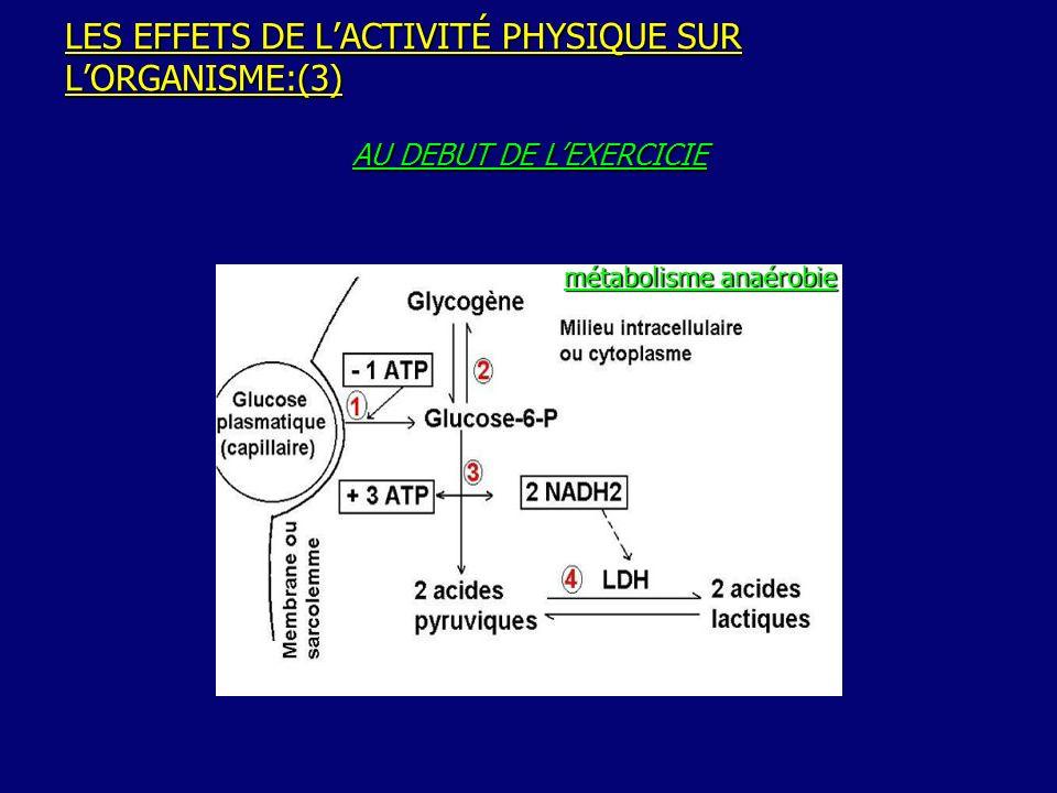 LES EFFETS DE L'ACTIVITÉ PHYSIQUE SUR L'ORGANISME:(3)