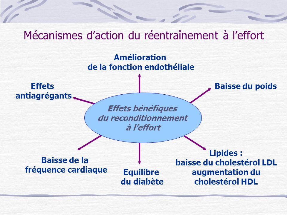 Mécanismes d'action du réentraînement à l'effort