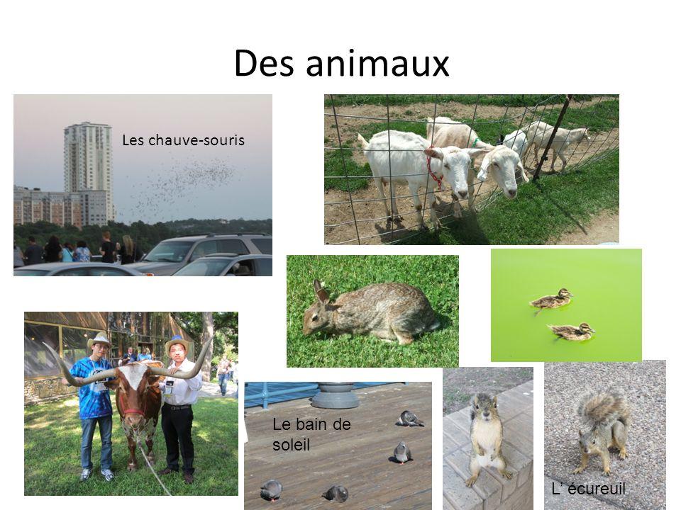 Des animaux Les chauve-souris Le bain de soleil L' écureuil