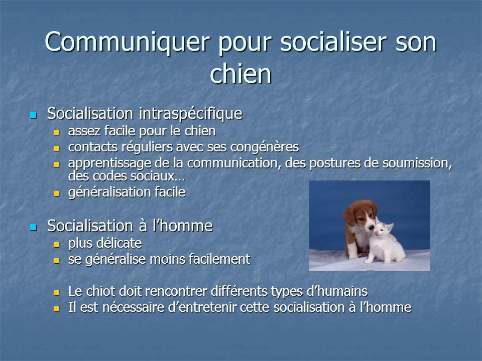 Communiquer pour socialiser son chien