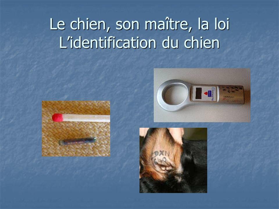 Le chien, son maître, la loi L'identification du chien