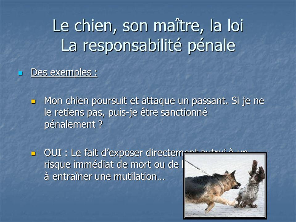 Le chien, son maître, la loi La responsabilité pénale