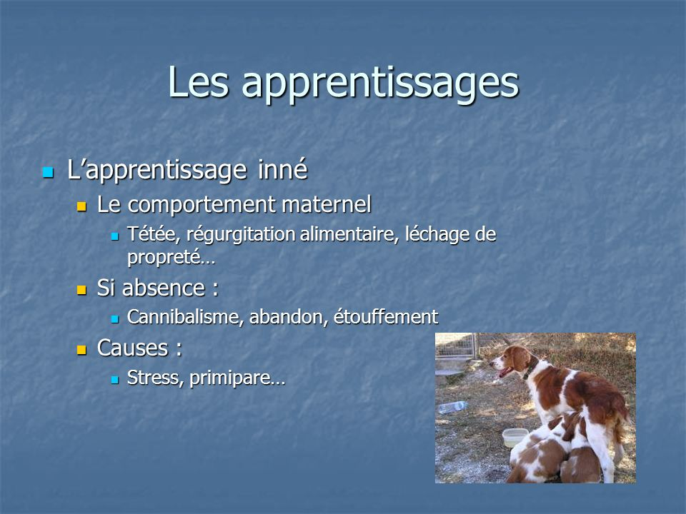 Les apprentissages L'apprentissage inné Le comportement maternel