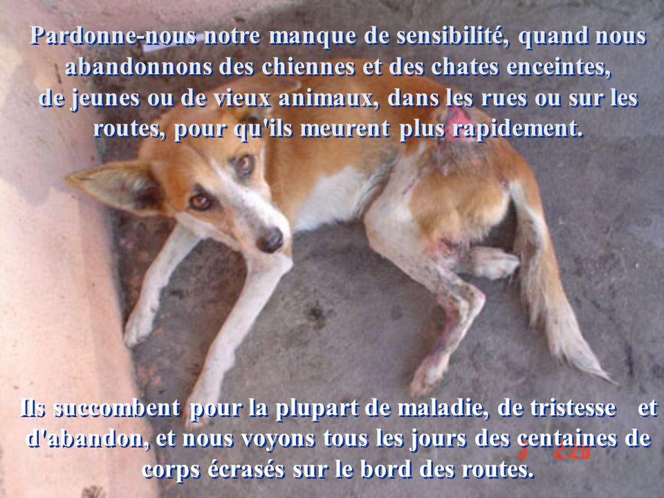 Pardonne-nous notre manque de sensibilité, quand nous abandonnons des chiennes et des chates enceintes, de jeunes ou de vieux animaux, dans les rues ou sur les routes, pour qu ils meurent plus rapidement.