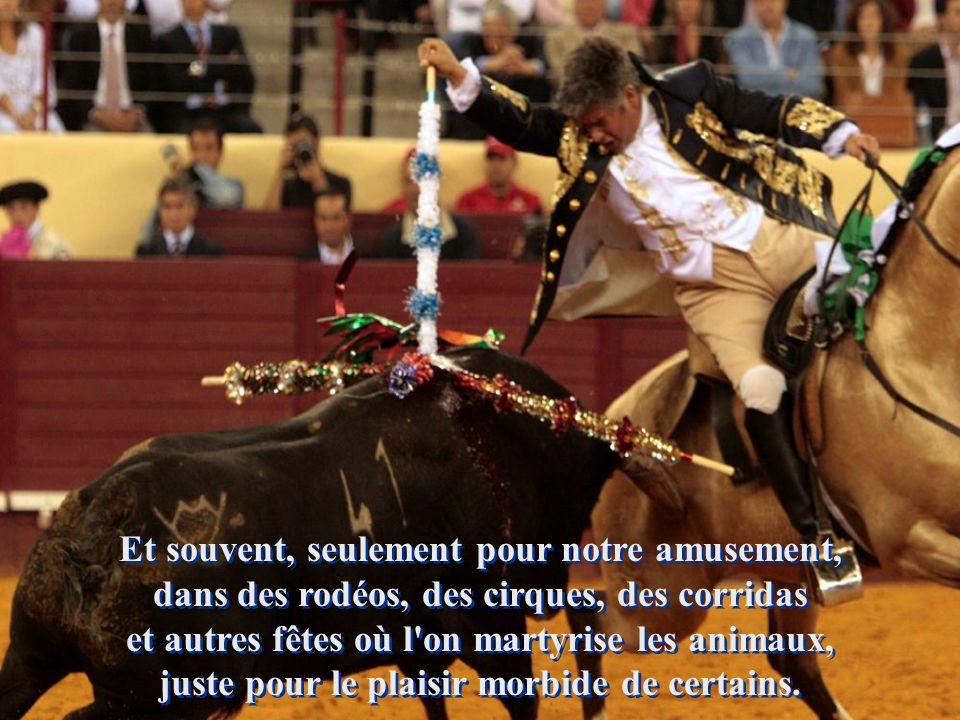 Et souvent, seulement pour notre amusement, dans des rodéos, des cirques, des corridas et autres fêtes où l on martyrise les animaux, juste pour le plaisir morbide de certains.