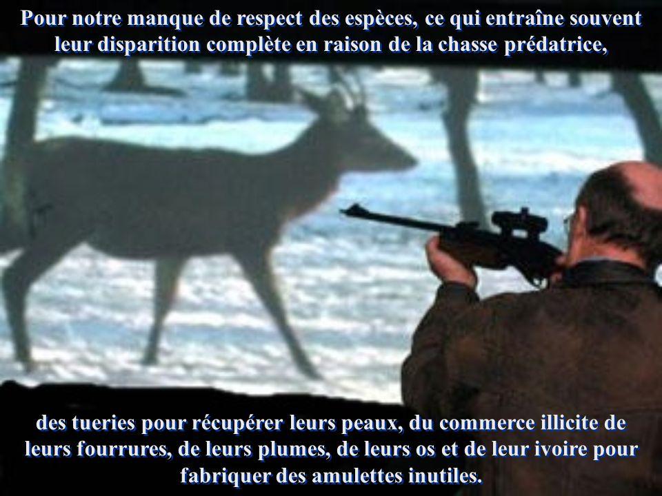 Pour notre manque de respect des espèces, ce qui entraîne souvent leur disparition complète en raison de la chasse prédatrice,